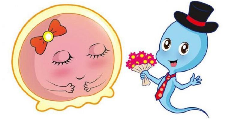 生化妊娠不可怕一般是受精卵有缺陷