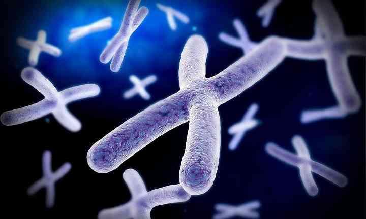 性染色体异常会导致智力低下