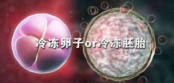 冷冻卵子和冷冻胚胎的区别